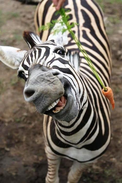 10 Super Happy Animals