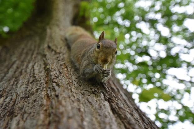 10 Nutty Facts About Squirrels
