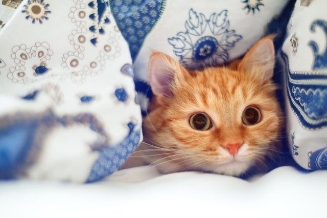 Can Cats Smell Cancer In Humans?