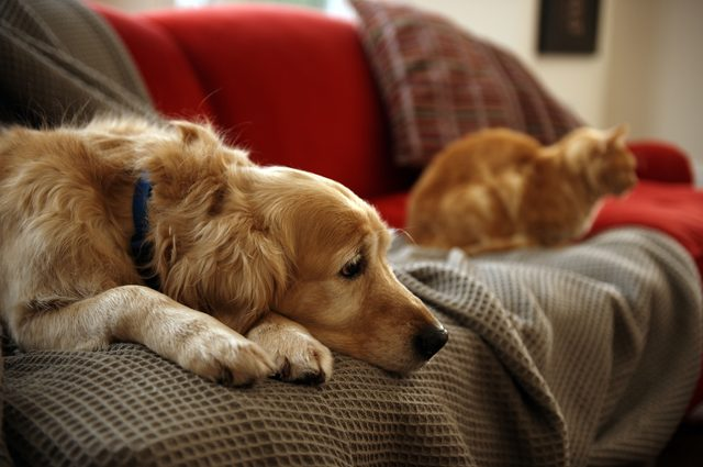Do Dogs & Cats Know When Their Owner Is Dying?