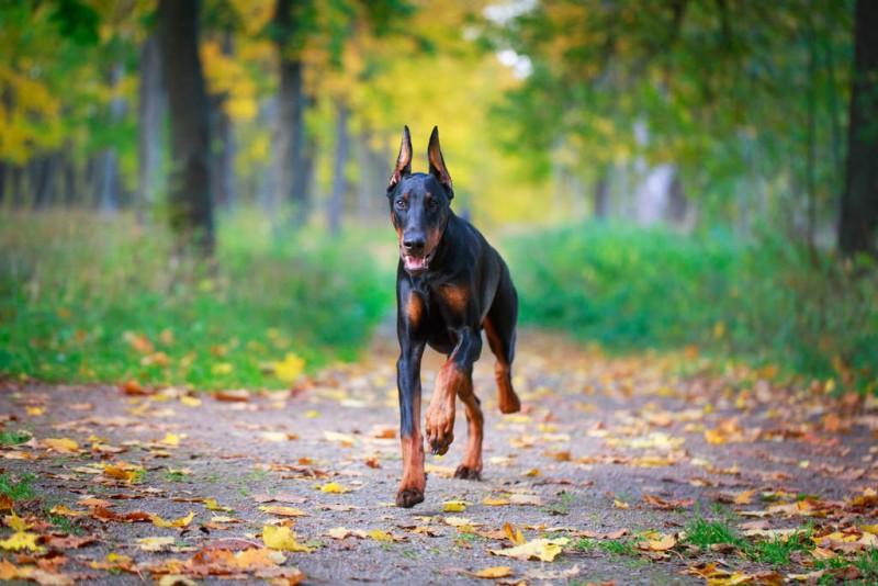 The 10 Fastest Dog Breeds Animals Katalay Net