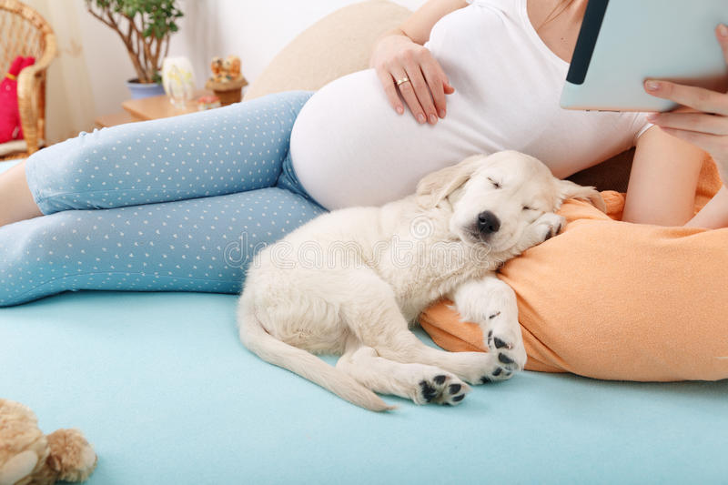 Does My Dog Know I'm Pregnant Before I Do?