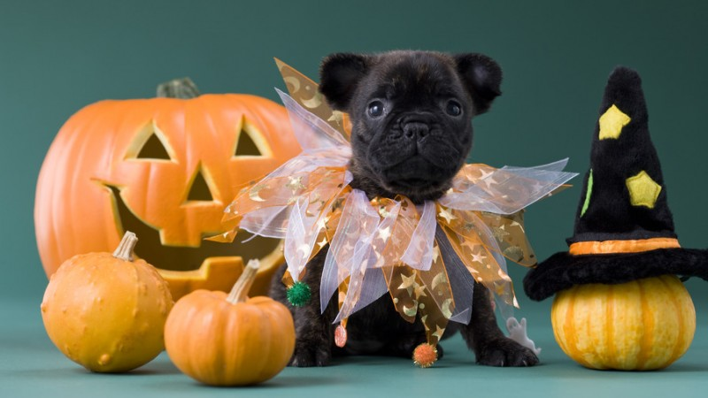 How to Give Your Pet a Safe and Happy Halloween