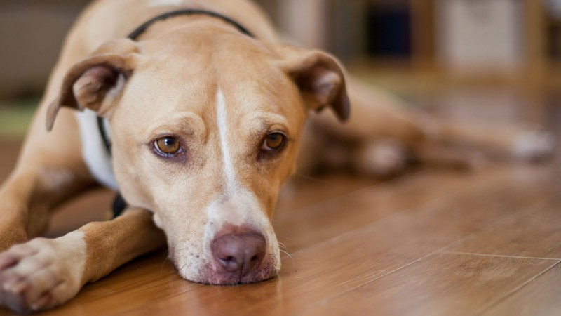 How Your Dog's Behavior Changes With Age