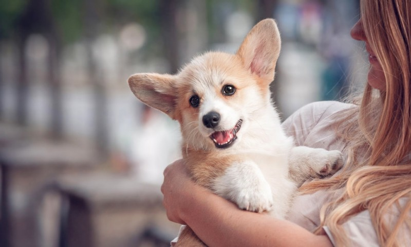 Top 10 Dog Breeds Suitable for Young Kids