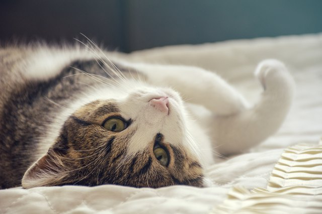 What's The Best Cat Litter For Your Lifestyle?