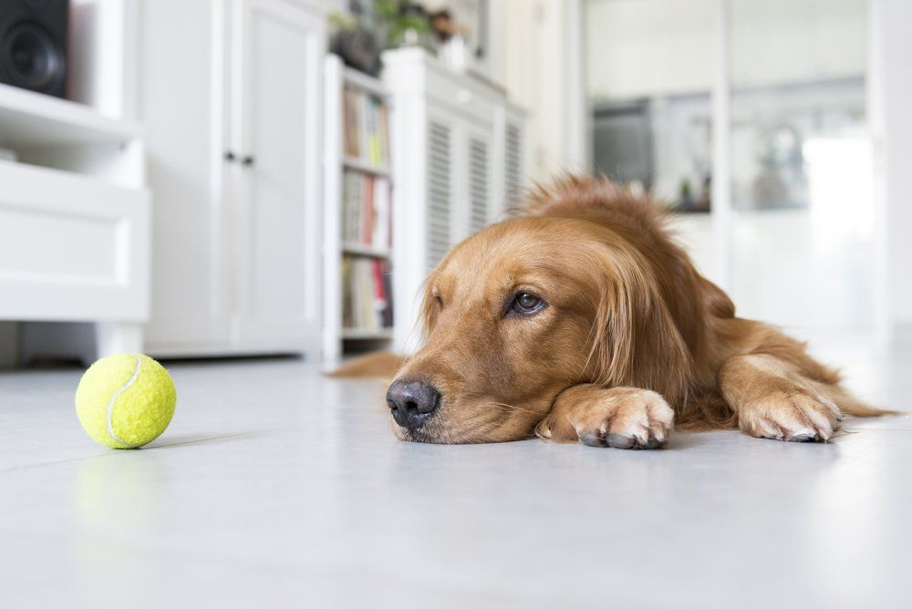 7 Mistakes That Make Your Dog Depressed