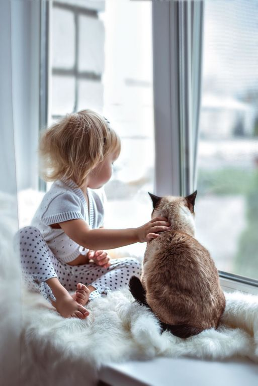 Top 5 Calm Cats for Kids