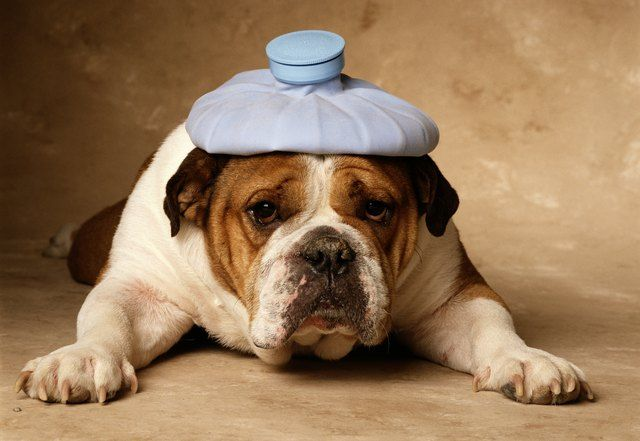 Do Dogs Get A Headaches?