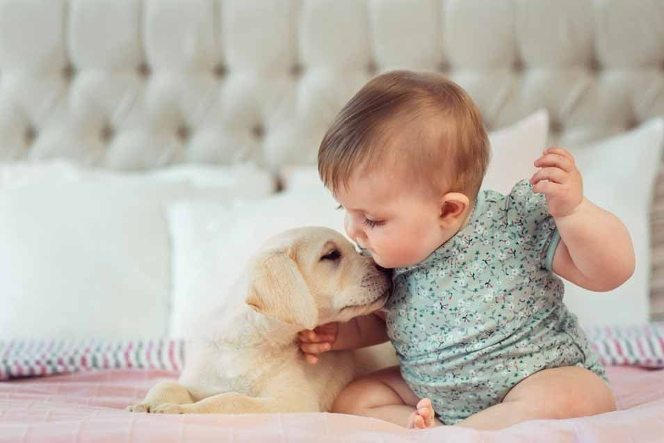 How To Introduce a Baby To a Dog