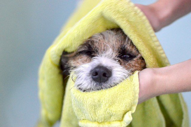 Why Do Some Dogs Hate Baths?